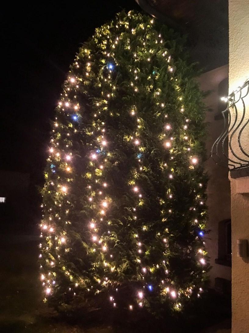 Tannenbaum Draußen Schmücken.Einen Weihnachtsbaum Im Freien Schmücken Luminal Aprk
