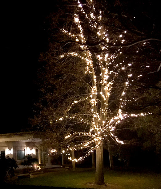 Cómo Decorar Las Ramas De Un árbol Con Luces Luminal Park