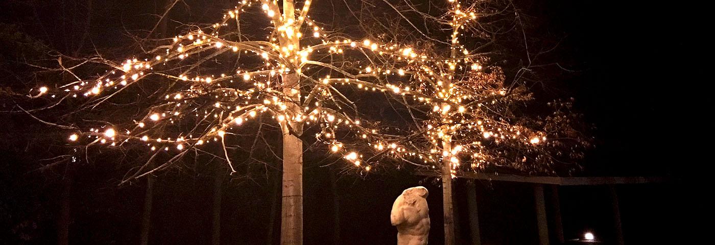 C mo decorar las ramas de un rbol con luces luminal park for Como decorar un arbol de jardin